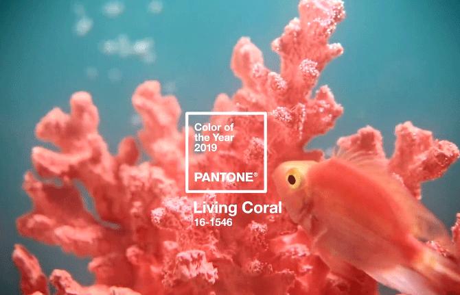 มาแล้ว!! PANTONE ประกาศสีแห่งปี 2019 ได้แก่สี Living Coral